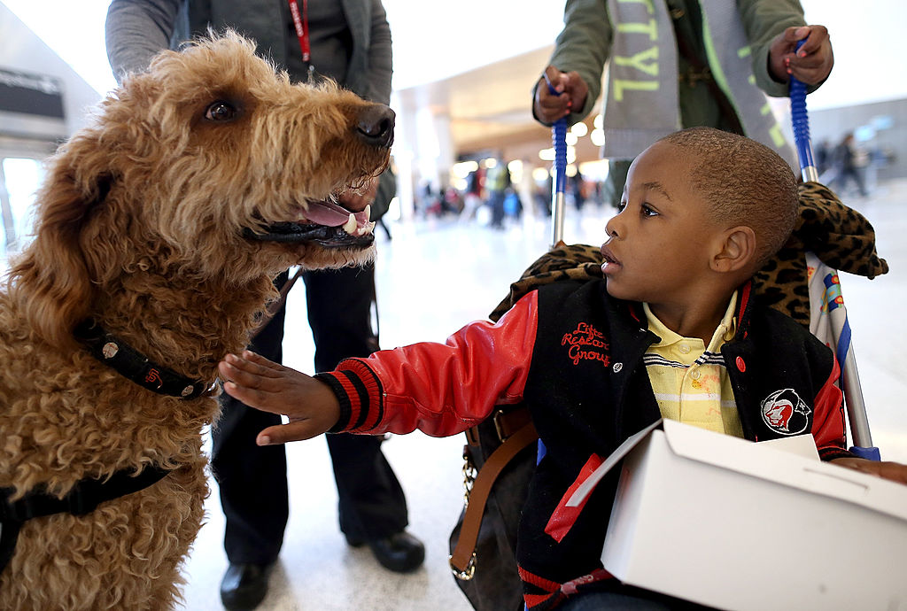 Therapy Dogs, Pigs, Ponies Available In US Airports To Remove Stress, Anxiety Among Passengers