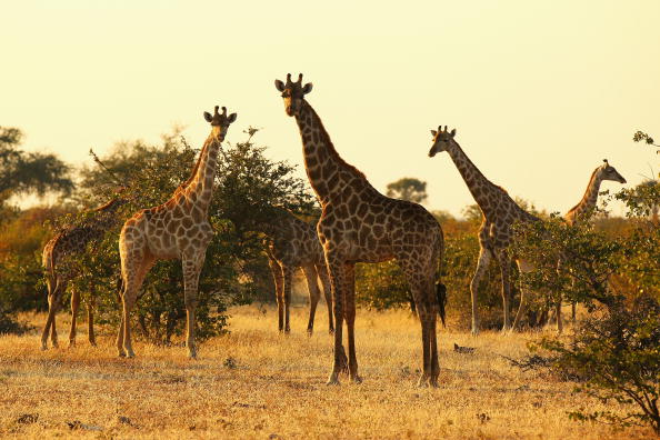 4 Exciting Ways To Totally Experience Unconventional Safaris, Approximate Cost