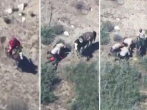 Disturbing video shows horse thief being beaten by police in California