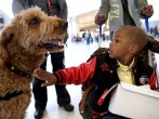 Therapy Dogs Soothe Harried Passengers At San Francisco Int'l Airport