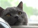 Sony PXW-X70 4K XAVC Footage - 4K Cats ^_^