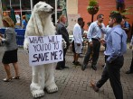What can we do to help the Polar Bears and all other Arctic Species