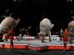 Ringling Bros. And Barnum & Bailey Presents Bellobration