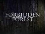 Warner Bros. Studio Tour London | Forbidden Forest