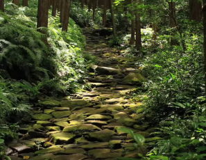 [Beautiful Japan] World Heritage Kumano Kodo Pilgrimage Routes