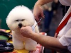Fourth And Final Day Of Crufts
