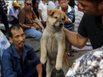 Taiwan Bans Consumption of Dog And Cat Meat