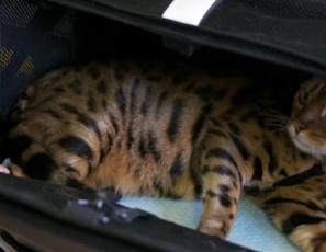 Sleepypod Air pet carrier - Instructional Video