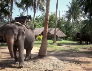 Ever wanted to ride an elephant? You have to watch this!