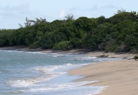 File photo of a beach in Barbados