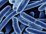 By 2050 10 million people could be killed each year by superbugs