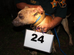 A photo of one of the dogs from the dog fighting ring busted in Baltimore