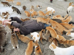 Cats in Aoshima Island outnumber humans six-to-one