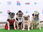 General Mills Cereal Hosts Exclusive Pets-Only Red Carpet Movie Experience for 'The Secret Life of Pets'