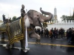 Elephants Pay Tribute To Late King Bhumibol