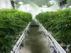 The legalization of marijuana