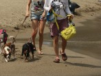 Five Things That You Need To Do When You Are Traveling With Your Pet