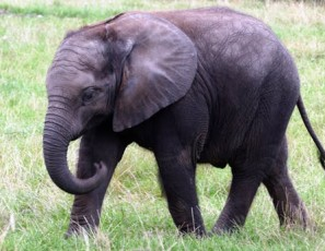 To ethically interact with elephants10 places you need to go