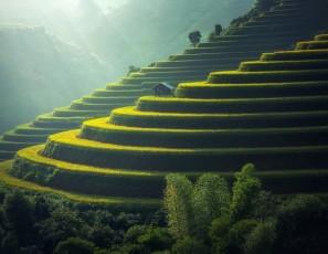 Rice Plantation Thailand Rice Agriculture