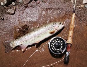 Go to California for Steelhead Fly Fishing