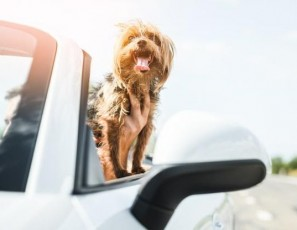How To Secure Your Dog In The Car