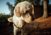 What are the travel precautions when you travel with a dog?