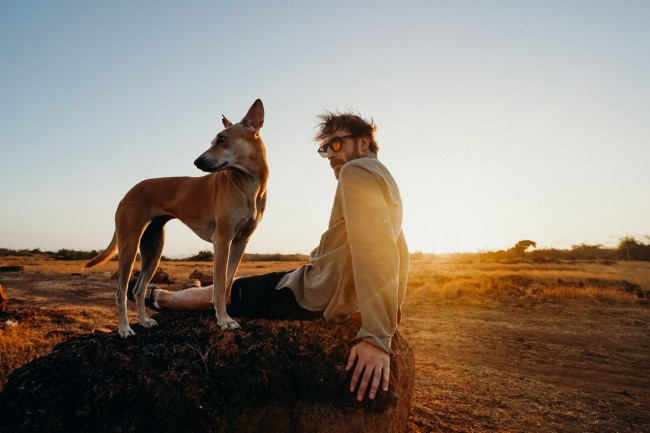 How To Help Your Dog Overcome Fear Of Flying