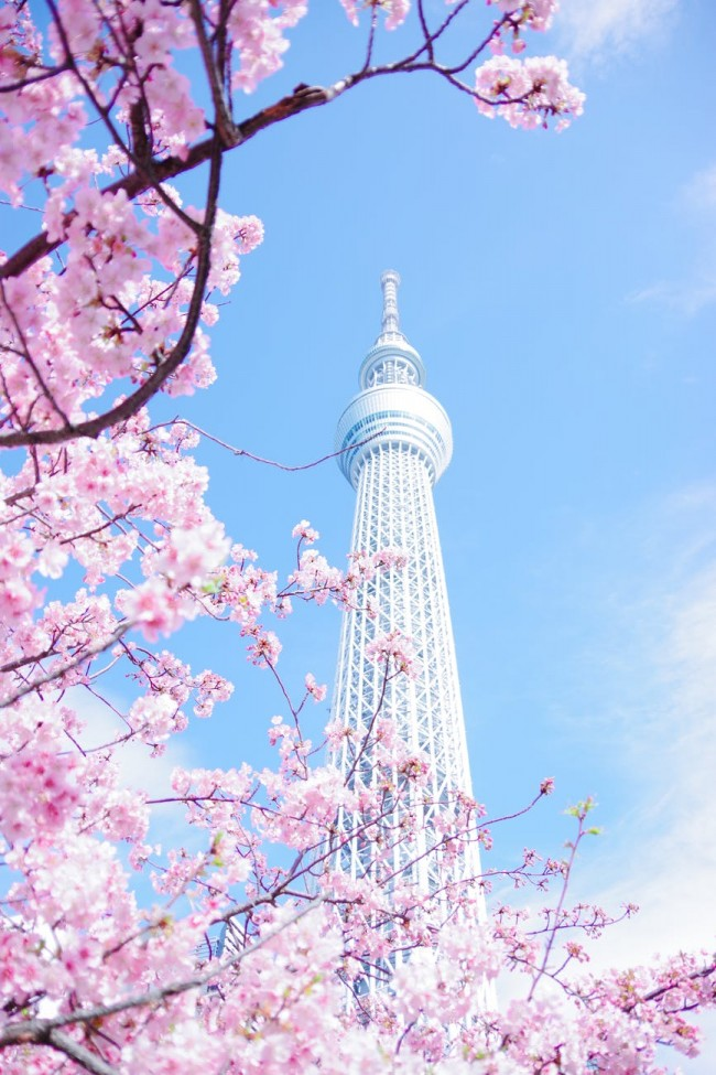 """A neighborhood with various views of Tokyo Tower! Total guide to """"Daimon/Hamamatsucho"""""""