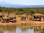6 Tips for Planning the Perfect African Safari Trip