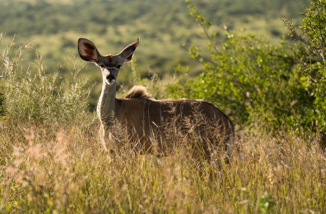 Top Five Offbeat National Parks You Need to Visit in Africa Now
