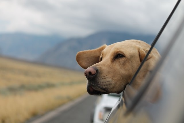 Pet-Friendly Vacation Spots in the US